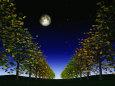 月明かりの銀杏並木
