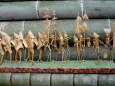 竹細工「化屋浮立」道具