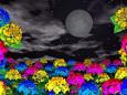月夜のアジサイ