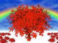 楓に彼岸花と虹