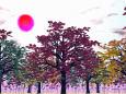 色づき始めの木々