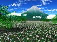 水仙の大群生