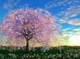 夜明けの花群生に大樹