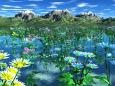湖面に咲く菊