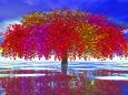 多彩色のカエデ大樹