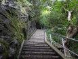 緑の中の階段