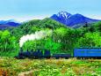 夏山 お花畑 蒸気機関車