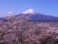 日本の風景 桜と富士山 壁紙1920x1440 壁紙館