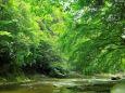 新緑の渓谷を歩く