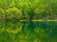新緑映す御射鹿池