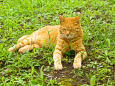 日比谷公園で見つけた猫