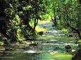こもれびの渓流