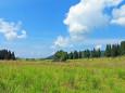 初秋の高原-ススキの原