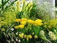 散歩道の花 1702-16-2
