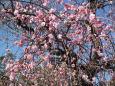 早春の花を訪ねて