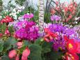 散歩道の花 1702-21-2