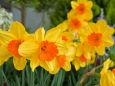 散歩道の花 1702-24-1