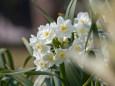 散歩道の花 1703-23-2