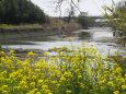 春の川辺で