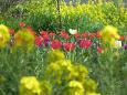 散歩道の花 1703-24-2
