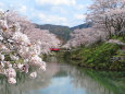待ち遠しい桜の季節4