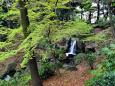 新緑の北の丸公園