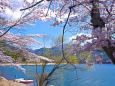 春の河口湖・湖畔の風景