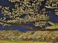 高岡古城公園の夜桜