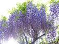 散歩道の花 1704-25-2