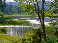 夏の尾瀬沼