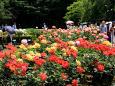 バラ庭園2