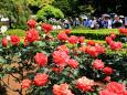 バラ庭園4