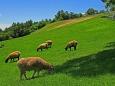 のどかな牧場