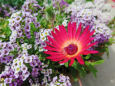 散歩道の花 1705-23-1
