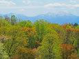 丸加高原の春紅葉と神居尻岳