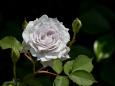 花 植物 ガブリエル 壁紙1920x1280 壁紙館