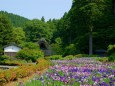 花菖蒲咲き乱れる千古の家