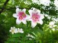 散歩道の花 1706-29-1