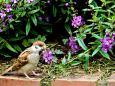 雀の食事画像
