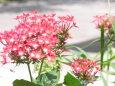 ブーケみたいな花壇の花