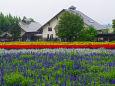 雨に濡れる花畑