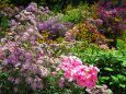 秋の花咲く庭園