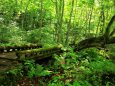 苔むす木橋