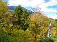黄葉越しの至仏山