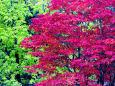 恵庭岳山麓の紅葉