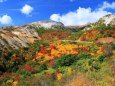 彩り鮮やかに広がる紅葉
