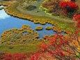 秋の弓が池