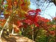 秋の散歩道2