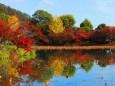 嵯峨野大覚寺大沢の池の秋