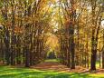 札幌の紅葉11~輝く木立の道